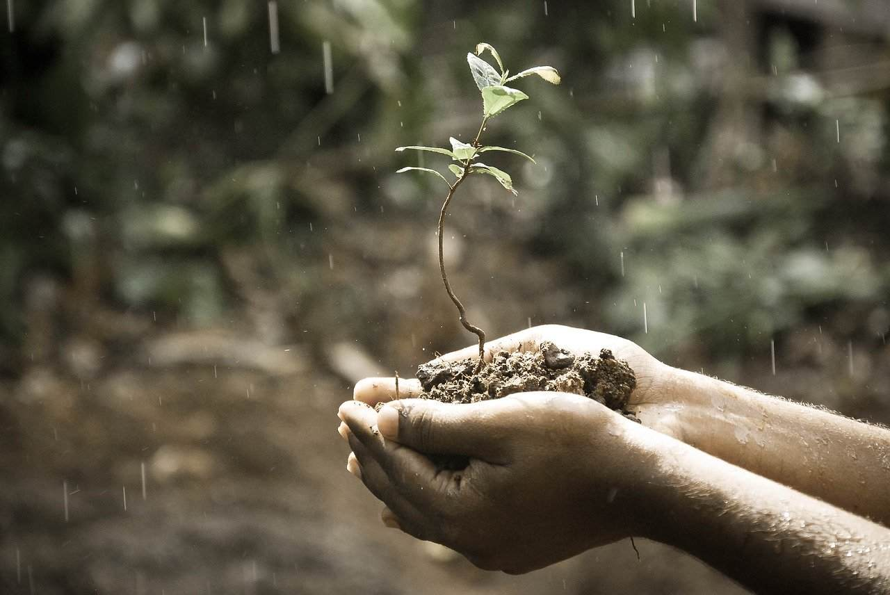 wpływ kwaśnych opadów na środowisko